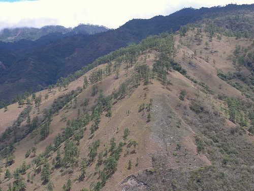 Горный лес Гватемалы