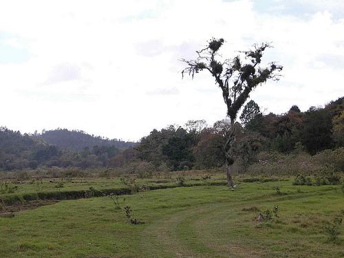 Поля и луга Гватемалы