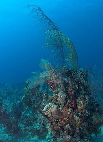 Подводный мир Багамских островов