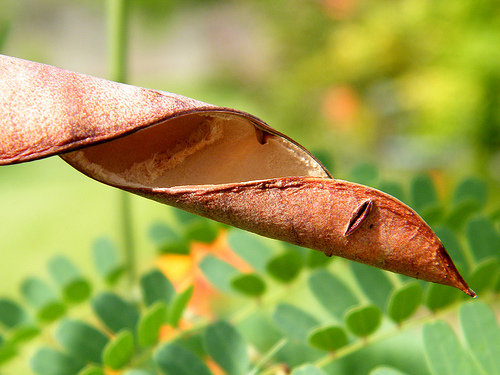Дивная флора Барбадоса