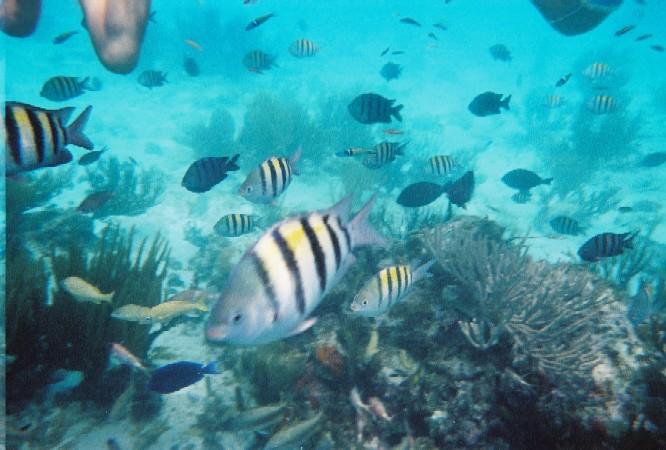 Океанские рыбки, обитающие в водах Каймановых островов