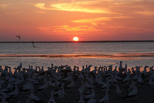 Закат над побережьем Клиппертона