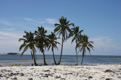Пальмы на побережье Клиппертона