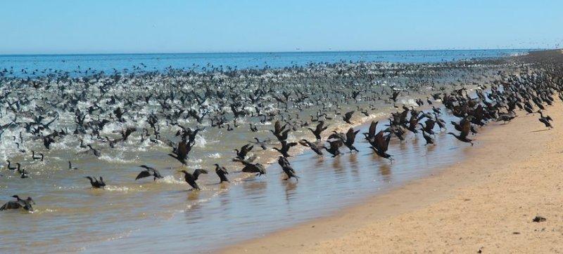 Намибийская пустыня. Птицы
