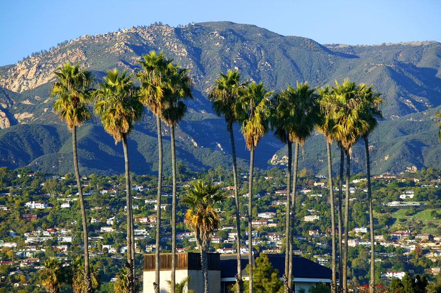 Пальмы Калифорнии, Санта-Барбара