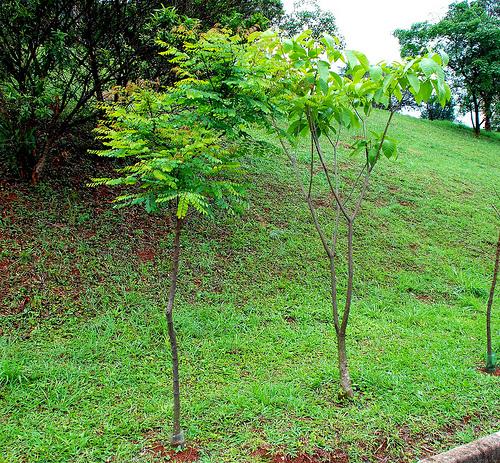 Зеленые насаждения на землях Бразилии