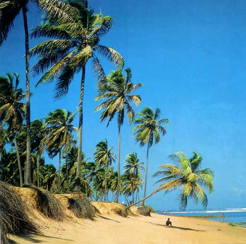 Пальмы на песчаном пляже Бразилии