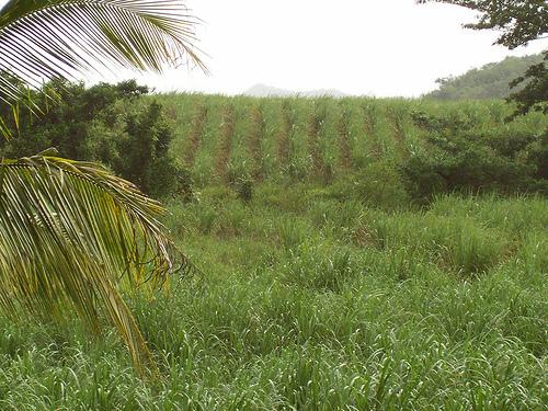 Плантации на Ямайке