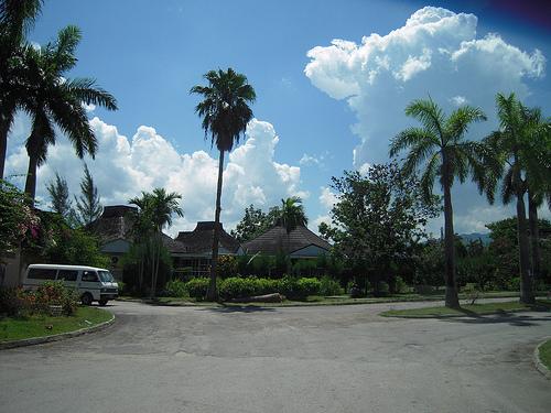 Пальмы на Ямайке