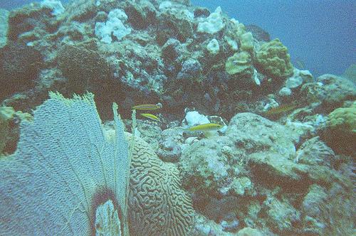 Подводный мир Сент-Льюиса