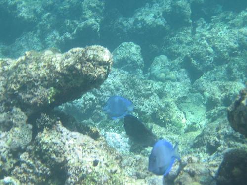 Подводный мир Тринидад и Тобаго