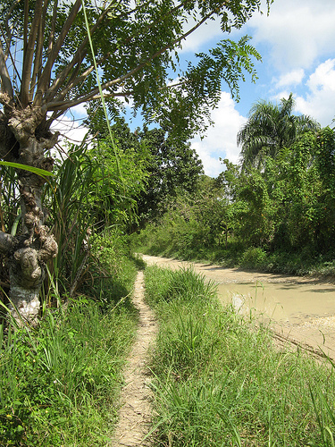Островные пейзажи Доминиканской республики