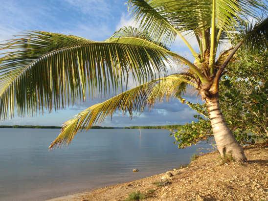 Пальмы на побережье Гваделупы