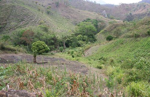Лесные массивы Гондураса