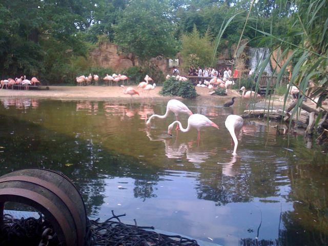 Аахенский зоопарк