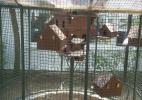 Посреди кафе клетка с голубями