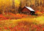 Золотая осень в лесах Канады