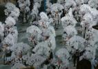 Знаменитый бразильский карнавал