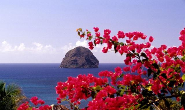 Цветущие деревья на Мартинике