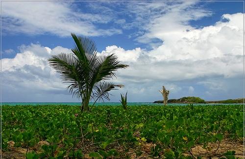 Пальмы на побережье Мартиники