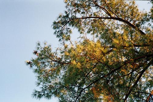 Осень на Монсеррате