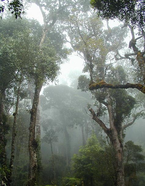 национальный парк Кинабалу