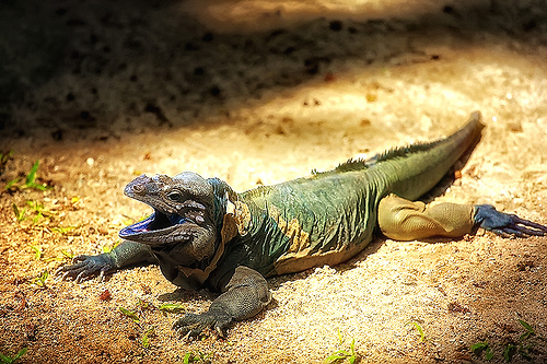 Удивительная фауна Острова Навасса