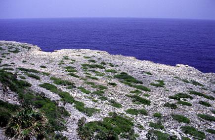 Линия берега на Острове Навасса