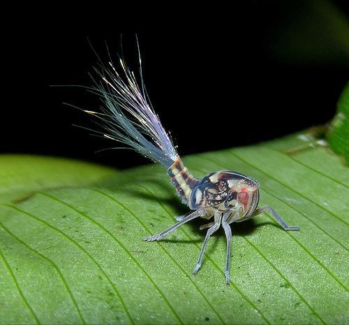 Удивительная фауна Панамы