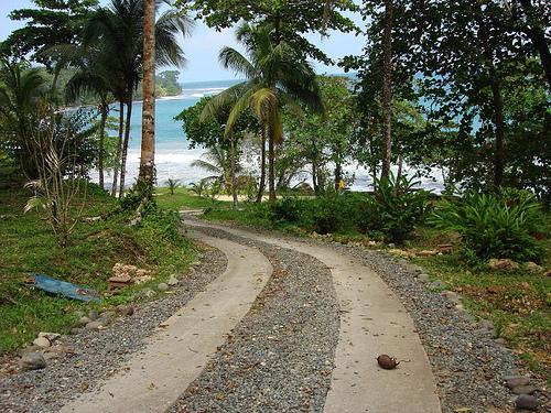 Пальмы на побережье в Панаме