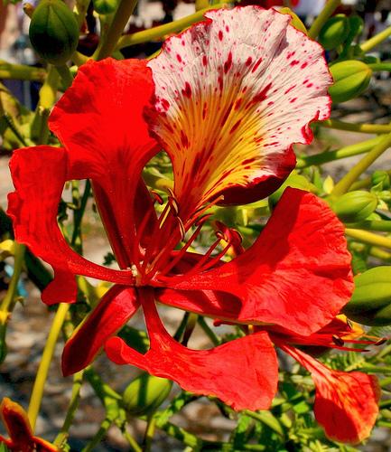 Красочная флора Сальвадора