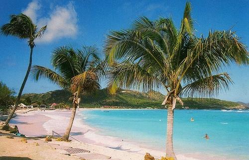 Пальмы на побережье Сен-Бартельми