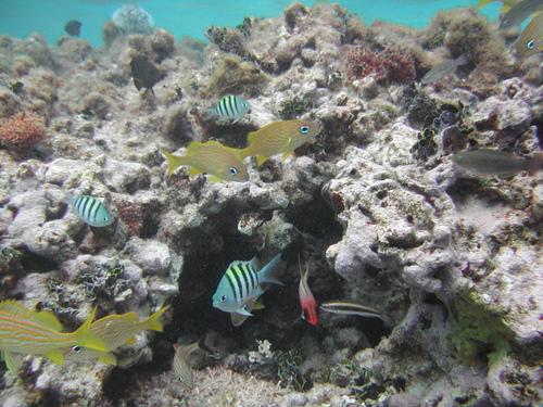 Подводный мир Сен-Бартельми
