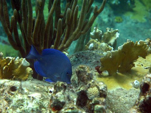 Кораллы в океане возле Сен-Бартельми