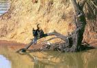 Тихая река Кванза в Национальном парке Кангадала