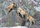 Коркеасаари (Хельсинский зоопарк)