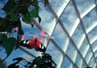 Сад Бабочек в Таиланде
