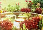 Чудесные пейзажи Ботанического сада в Абхазии