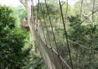 Знаменитая подвесная дорога, Национальный парк Какум, Кейп-Кост, Гана