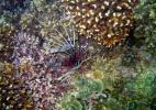 Подводный мир. Индийский океан