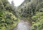 Леса у подножия гор. Нацональный Парк Тонгариро