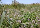 Вересковые ковры природного заповедника Звин