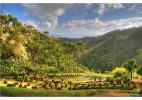 о. Мартиника