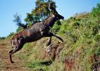 Национальный горный парк Бале в Эфиопии