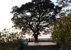 Далаба, Гвинея