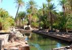 Парк Палмерайе в городе Дихил в Джибути