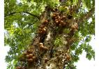 флора на о. Доминика