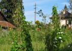 Зеленый Страшилка