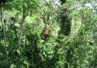 Обзорная площадка на подвесной дороге. Национальный парк Какум, Кейп-Кост, Гана