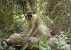 Животные в национальном парке Кианг, Гамбия